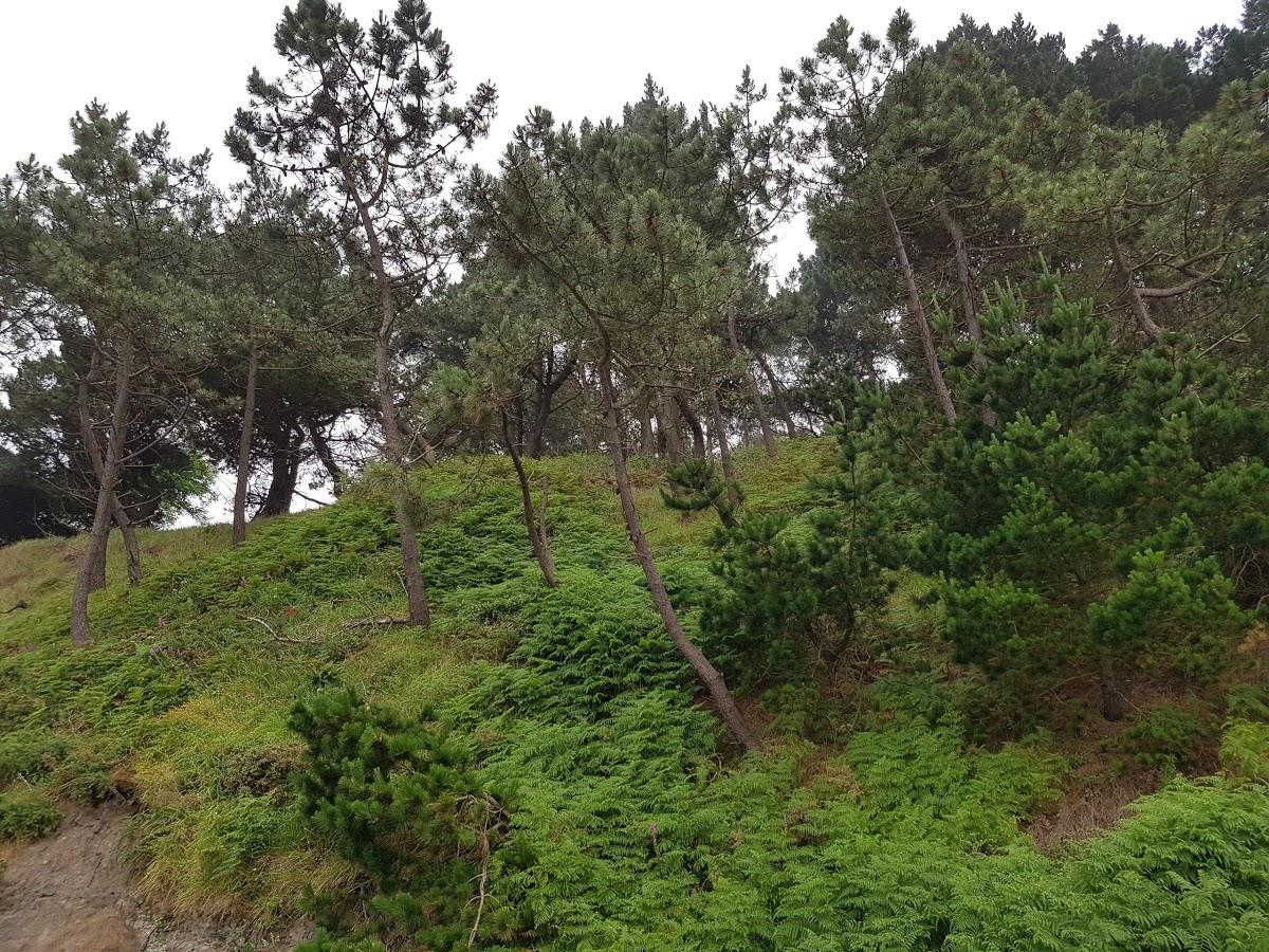Playa de Arnao en Castrillón - imagen 3